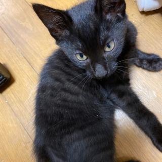 生後3ヶ月半くらいの黒猫子にゃんこ - 猫