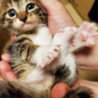 子猫(男の子)1匹と小さめの母ネコ ペアで!