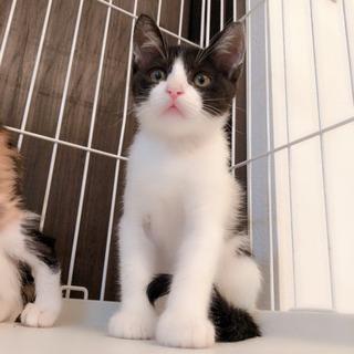 資材置き場の子猫①