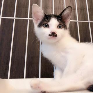 資材置き場の子猫②