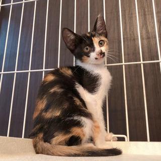 資材置き場の子猫④