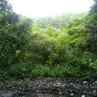 約1000㎡の荒れた状態ですが、中、長期的に草刈り、伐採等をしな...