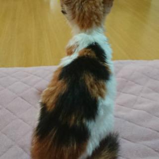 交渉中です♡ - 猫