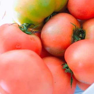 完売お取り引き中大人気【新鮮】トマト・ピーマン 譲ります。