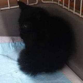 トライアル先決定、推定2ヶ月、黒猫オス
