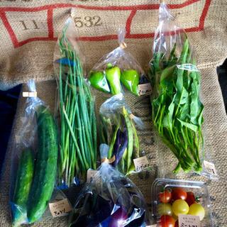 自然栽培 野菜セット80サイズ