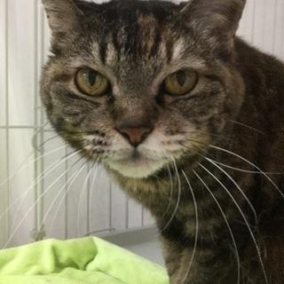 16歳の美魔女猫