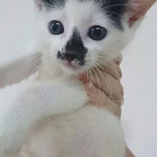 7月4日保護の猫ちゃん
