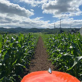 農園で収穫、出荷作業9:00〜17:00(不規則短時間OK)通勤...