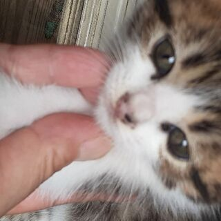 2ヶ月ぐらいの♀ネコチャン