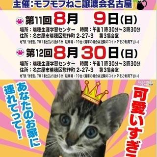 8/9(日) 猫の譲渡会 in 名古屋市瑞穂生涯学習センター