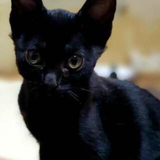 生後3ヶ月の懐っこい黒猫くんです♡
