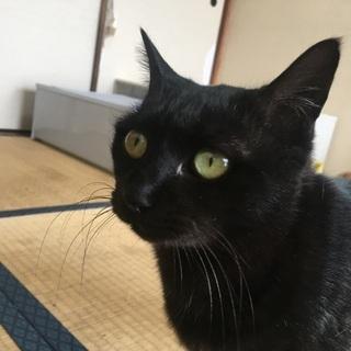 黒猫 メス 1歳半