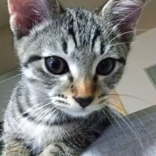 生後約3ヶ月☆男の子の子猫