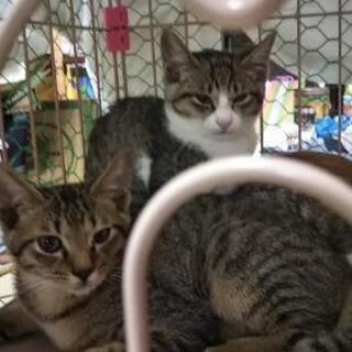 子猫3ヶ月 3匹