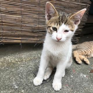 生後2ヶ月の4匹の子猫