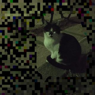 丸顔白黒猫ちゃん