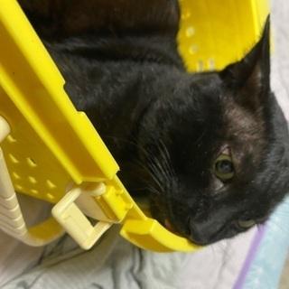 疥癬にかかってた2、3歳雄の黒猫
