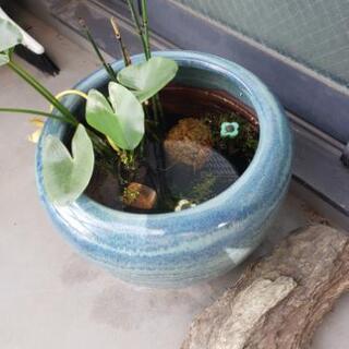 ビオトープ めだか鉢 水草 川石 卵のお守り産卵床