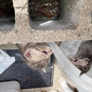 ほぼ決まりました、ありがとうございました生後15日位の子猫 8匹...