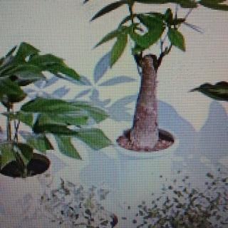 【東京】植木/観葉植物処分&引き取りサービス「町田・多摩・狛江・...