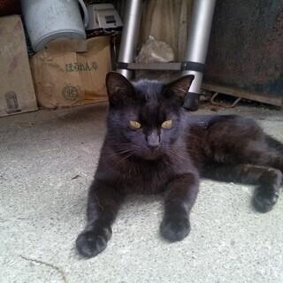 黒猫(オス)里親さま募集中