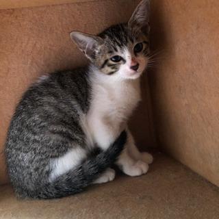 母猫と子猫1匹は里親さん決まりました。