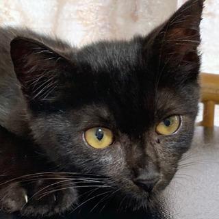 繁殖屋さん付近で保護 三ヶ月くらい 甘えん坊さんです 野良猫だと...