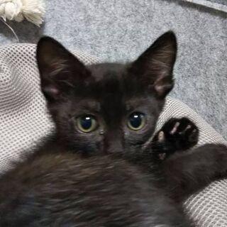 めっちゃ可愛い凄く甘えん坊な黒猫