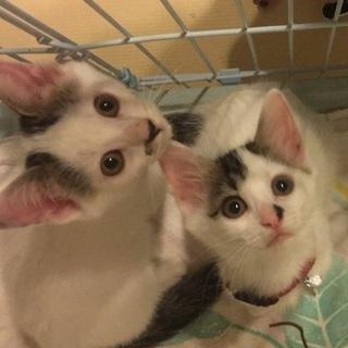可愛い子猫姉弟の家族を探しています