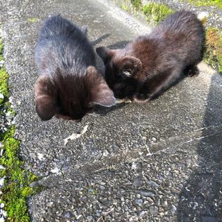 生後2ヶ月未満くらいの黒猫