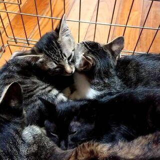 お母さん、子猫よんひき、がいます