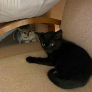 会社裏にいた兄弟子猫の里親さん募集