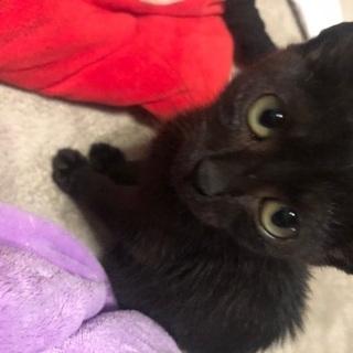 黒猫子猫 生後1ケ月半(推定)
