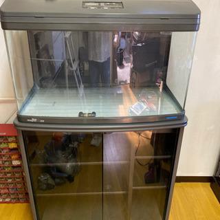 水槽 観賞魚 熱帯魚の画像