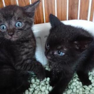 ブルーアイズの黒猫ちゃん💖の画像