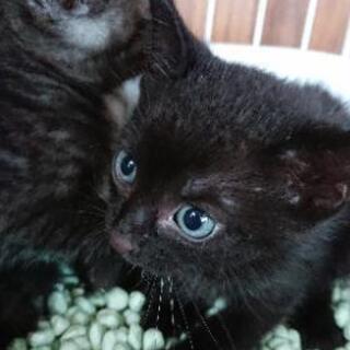 ブルーアイズの黒猫ちゃん💖 - 猫
