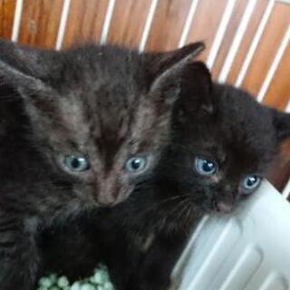 ブルーアイズの黒猫ちゃん💖 − 岡山県