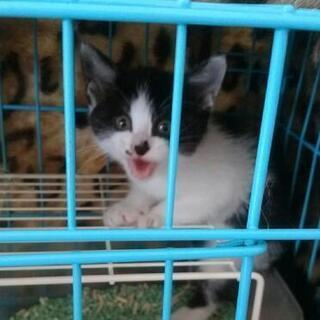 ナナ&ネネ、仲良し姉妹の里親募集です(=^_^=)。 - 猫