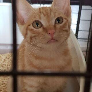 生後3ヶ月ぐらいの仔猫