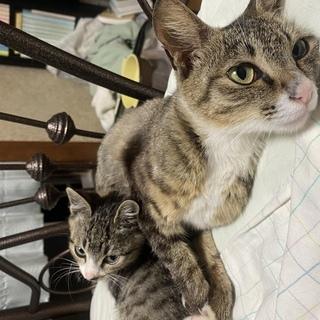 かわいい子猫と仔猫(保護猫) 里親決まりました!