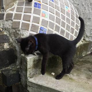 生後約3ヶ月の野良猫 - 里親募集