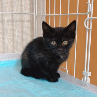 生後3ヶ月の5命兄妹❤怒った顔も超かわいい!黒猫ちゃん