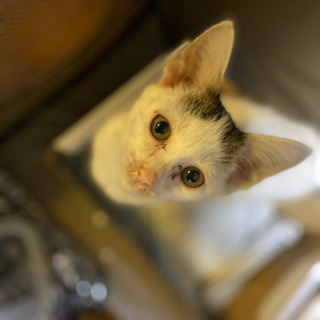 (素敵な里親様に出会えました)甘えん坊な子猫ちゃん♪