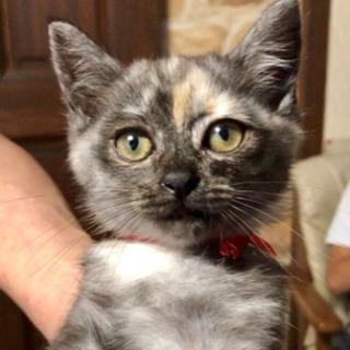 家族が決まりました☺︎【サビ猫】生後2ヶ月 女の子