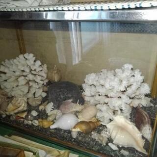 観賞用、珊瑚やら…