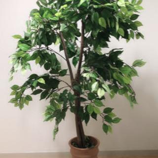 9/20まで。170センチ 観葉植物 フェイク
