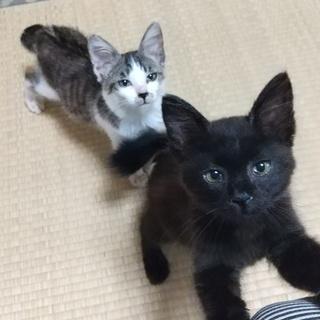奇跡の再会を果たした2匹の子猫を家族に迎えてください