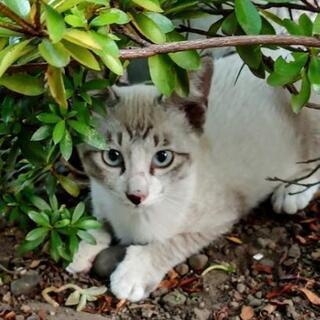 ※再募集※   保護猫の里親募集します