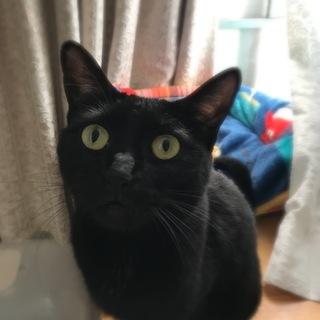 【みさお】尻尾までスラっと美人の黒猫